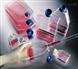 人乳腺癌阿霉素耐藥株,MCF7 ADR細胞說明書