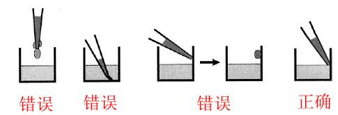 常见elisa试剂盒加样重点注意(附图解)